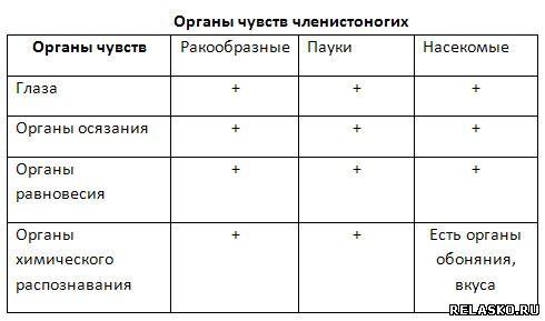 заполните таблицу отметив знаком