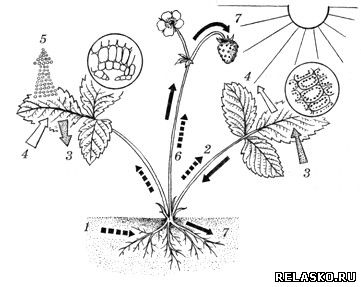 рис.116 схема обмена веществ в растении в какой книге