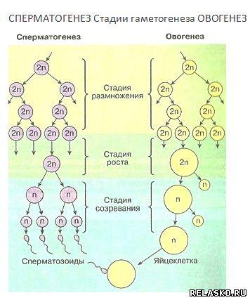 shlyuhi-trans-yaroslavl